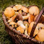 Cancro alla prostata: i funghi abbassano il rischio del 17%