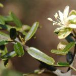 Scoperto un gastroprotettore naturale: è una pianta della famiglia del cappero