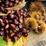 Castagne fresche crude: calorie e valori nutrizionali