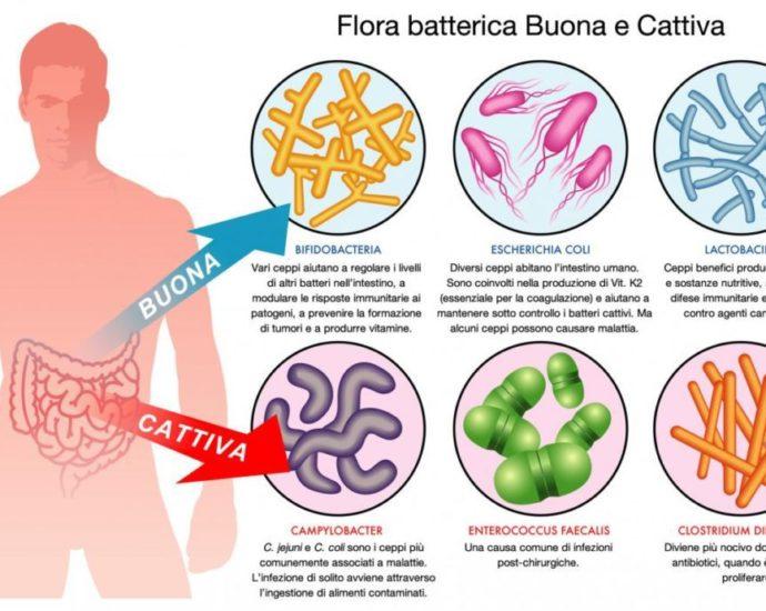 Microbioma intestinale e tumore al colon