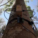 Sensori monitorizzano la salute di alberi e ambiente