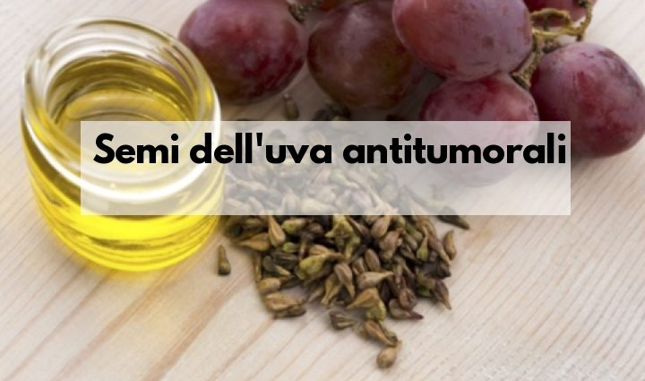 Semi di uva antitumorali