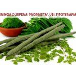 Moringa: proprietà, usi fitoterapia