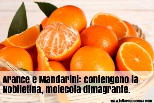 Arance e Mandarini alimenti dimagranti