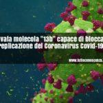 Coronavirus trovato meccanismo per bloccarlo