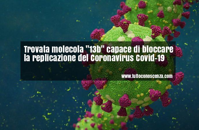 Coronavirus molecola 13b per bloccarlo