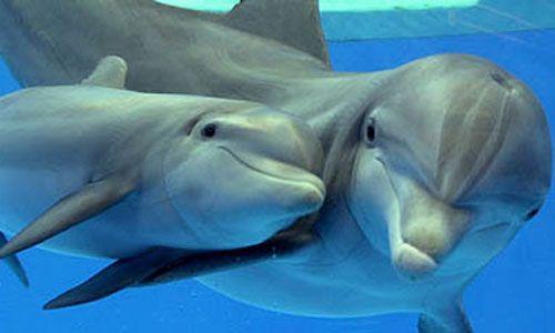Delfini comportamento sociale