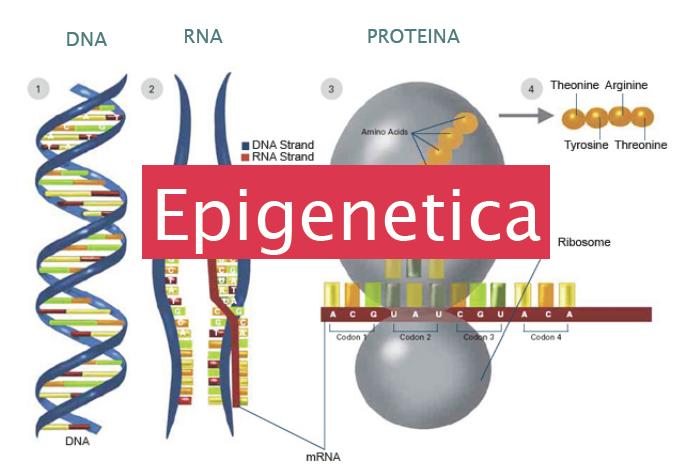 Come il pensiero modifica il DNA