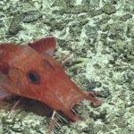 Inquinamento da mercurio nel mare: raggiunta la Fossa delle Marianne