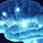 Nella memoria sono immagazzinati tutti gli eventi: scoperti neuroni-cassetto