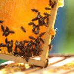 Monitoraggio degli ecosistemi tramite il miele