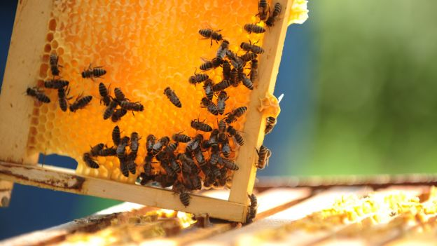 Monitoraggio ecosistemi miele