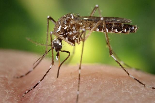 Nuovi repellenti zanzare naturali