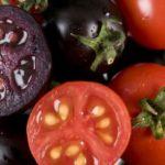 Il colore rosso del pomodoro è dato da una mutazione genetica
