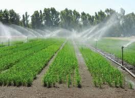 Riso e arsenico nuova tecnica coltivazione