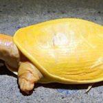 """Curiosità dal mondo: trovata Tartaruga """"albina"""""""