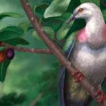 Curiosità dal mondo: identificato piccione di grosse dimensioni estinto