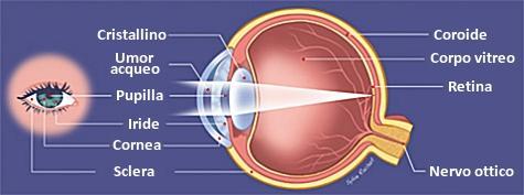 Glaucoma cellule staminali nervo ottico