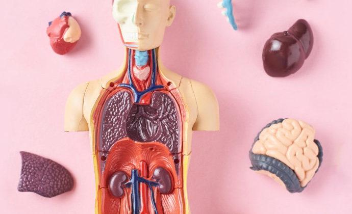 Microplastiche e nanoplastiche nel corpo