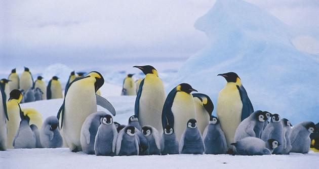 Scoperte colonie Pinguini Imperatore Antartide