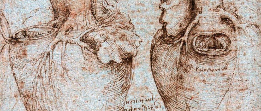 Trabecole cuore disegnate da Leonardo Da Vinci