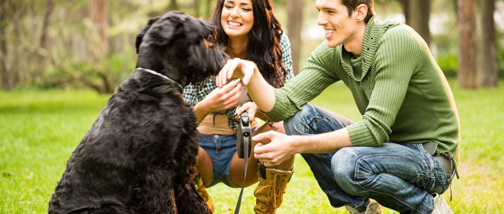 Cani ascoltano le parole come esseri umani