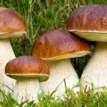Funghi porcini: calorie e valori nutrizionali