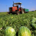 Produzione biocarburanti dagli scarti dell'Anguria