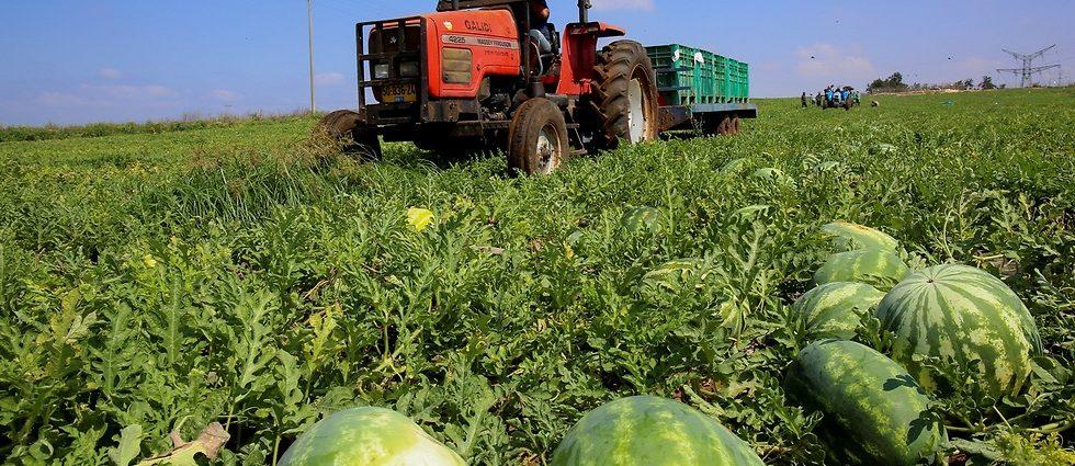 Produzione biocarburante semi anguria