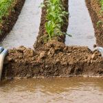 Riutilizzo acque reflue come fertilizzanti