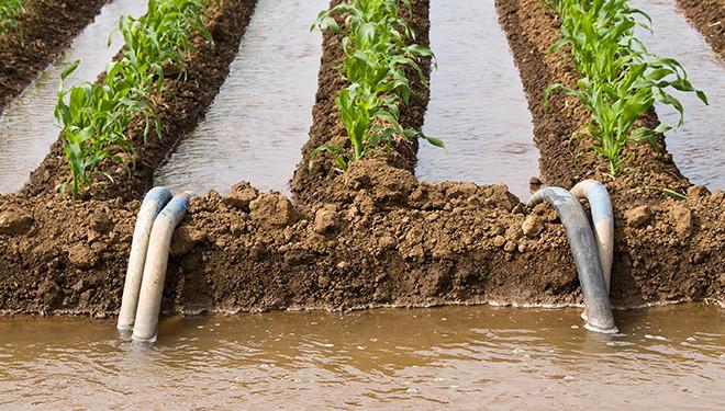 Recupero fertilizzanti da acque reflue