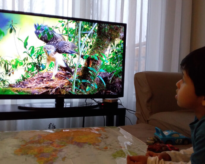 Guardare natura in TV fa bene