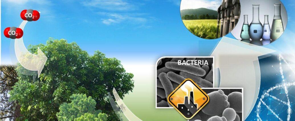 Biodiesel da biomasse con microrganismi