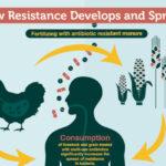 Antibiotico-resistenza: una possibile soluzione con gli antibiotici di nuova classe