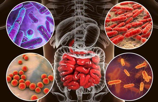 Microbioma e depressione legame